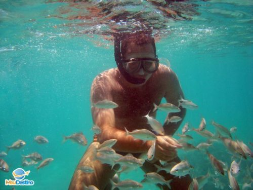 Mergulho em Maracajaú - Rio Grande do Norte