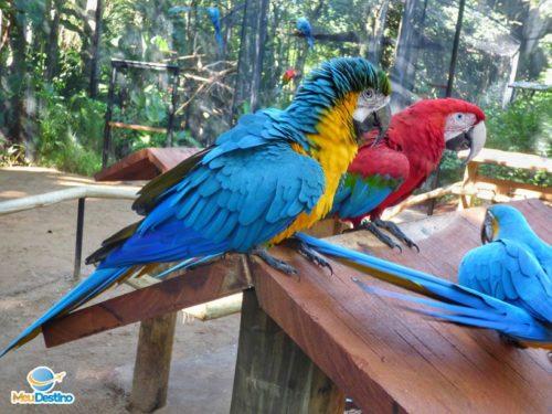 Parque das Aves - Foz do Iguaçu-PR