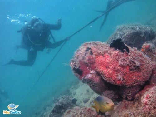 Mergulho na Ilha das Cabras - Ilhabela-SP